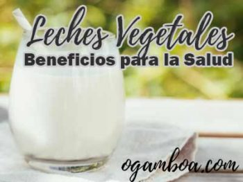 tipos leches vegetales caseras