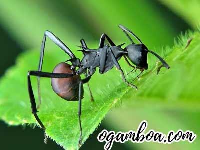 porque hay muchas hormigas en mi casa