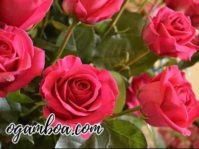 mejores florerias en puebla baratas