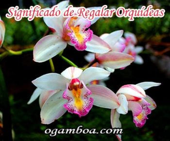 el significado de regalar orquideas segun su color