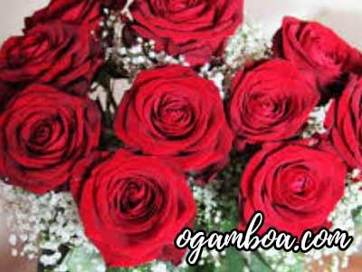 comprar flores a domicilio en puerto vallarta